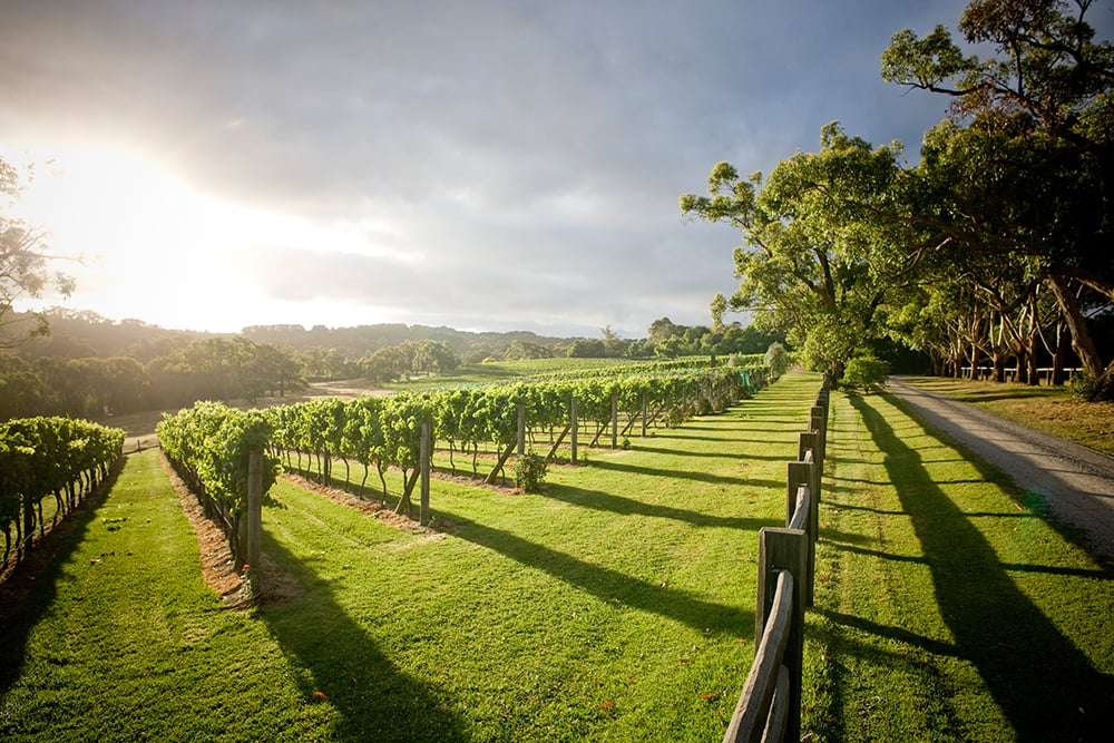 Elgee Park & Baillieu Vineyard Wine Dinner